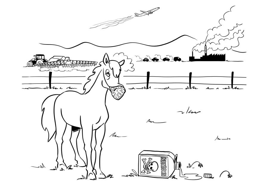 Intoxications - Drainage toxinique du cheval
